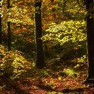 Autumn Glory by Derek Smyth
