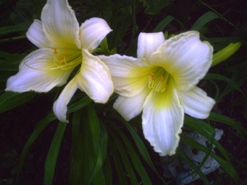 daylily by grannyjune
