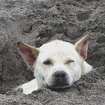 Cute Bali dog found a good place in the sand to rest by Bumblebeegirl