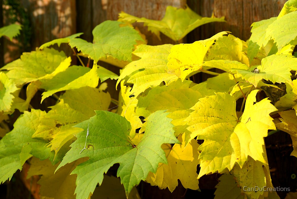 Autumn grape leaves by CanDuCreations