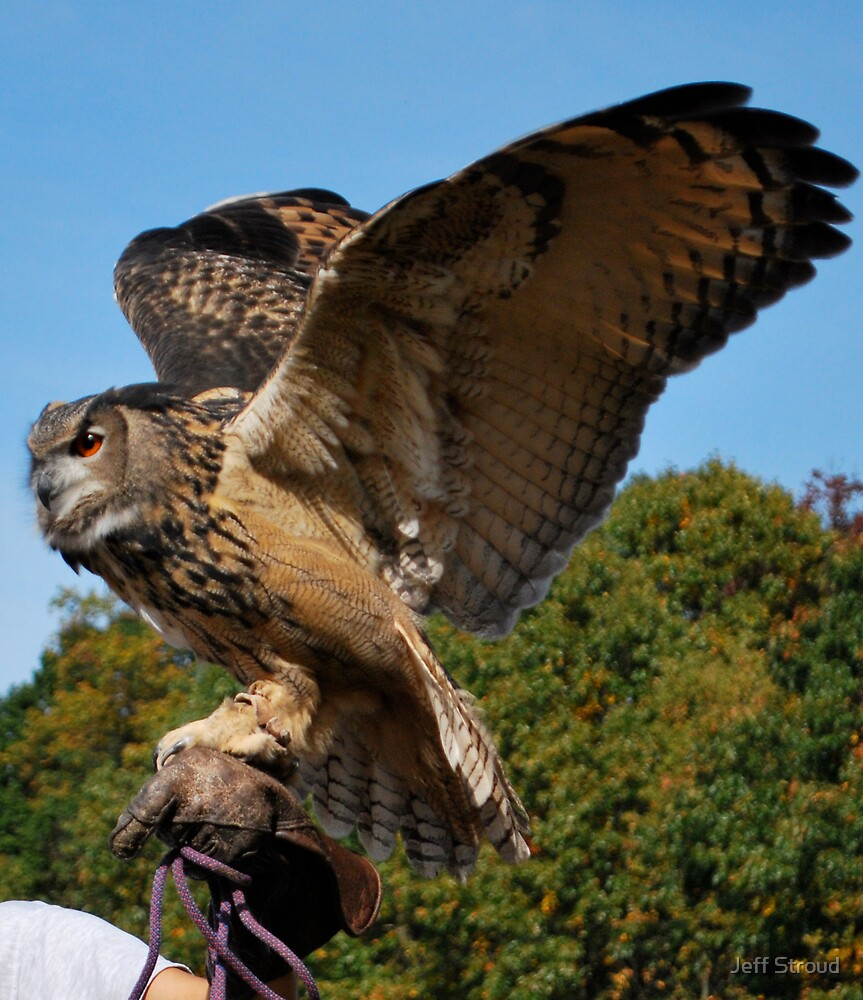 owl in flight ? by Jeff stroud