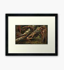 Fallen Tree by Alexandre Calame Framed Print