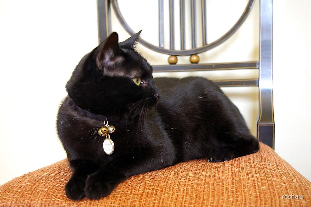 Black Cat, Orange Chair by rdshaw
