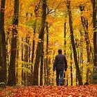Walking In An Autumn Wonderland by Derek Smyth