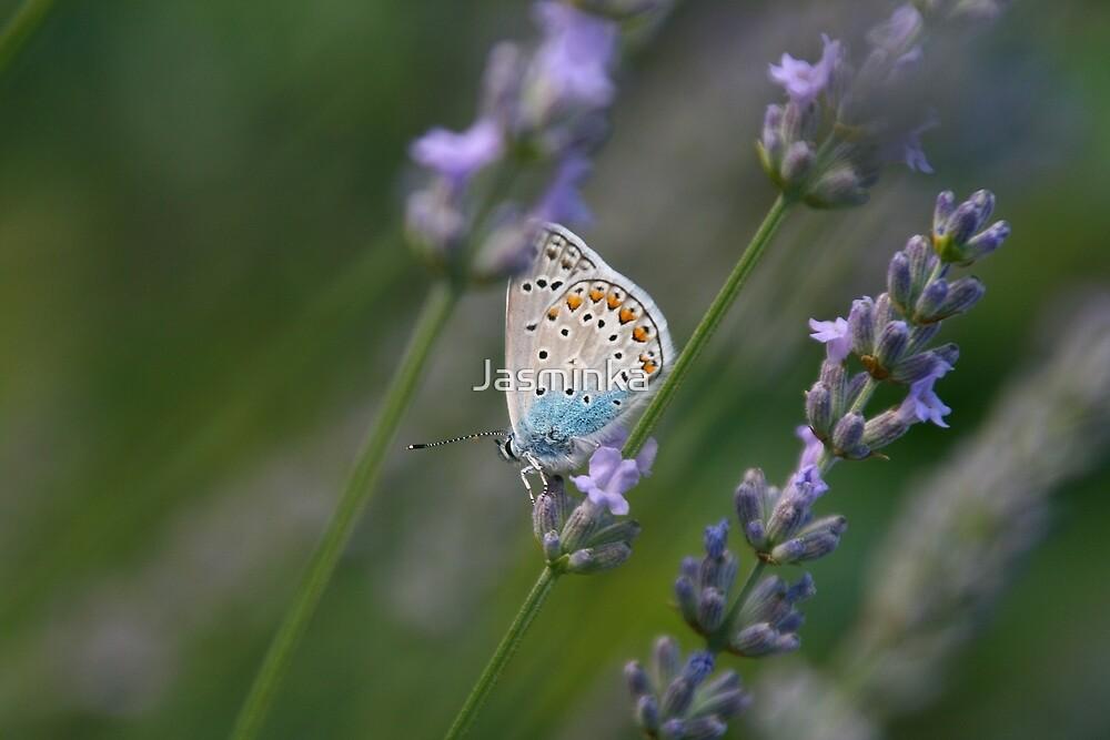Butterfly in lavender by Jasminka