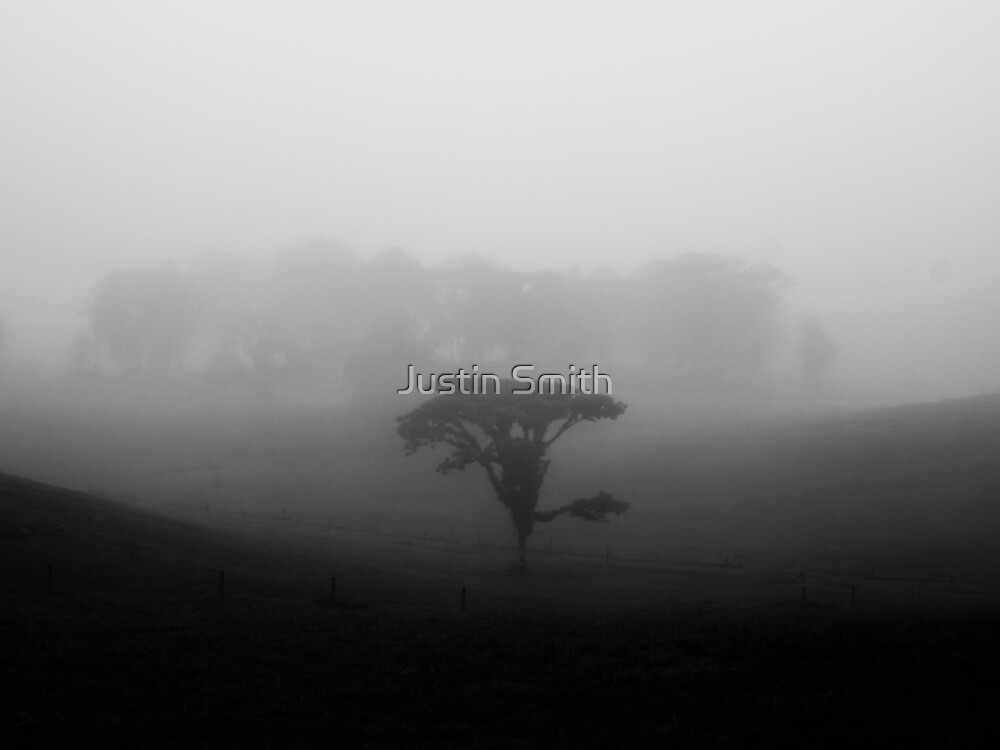 Tree in the Mist 2 by Justin Smith