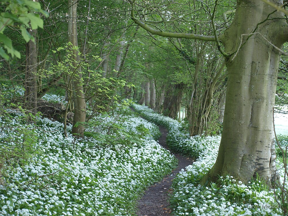 Markwells Wood by Clive Midson