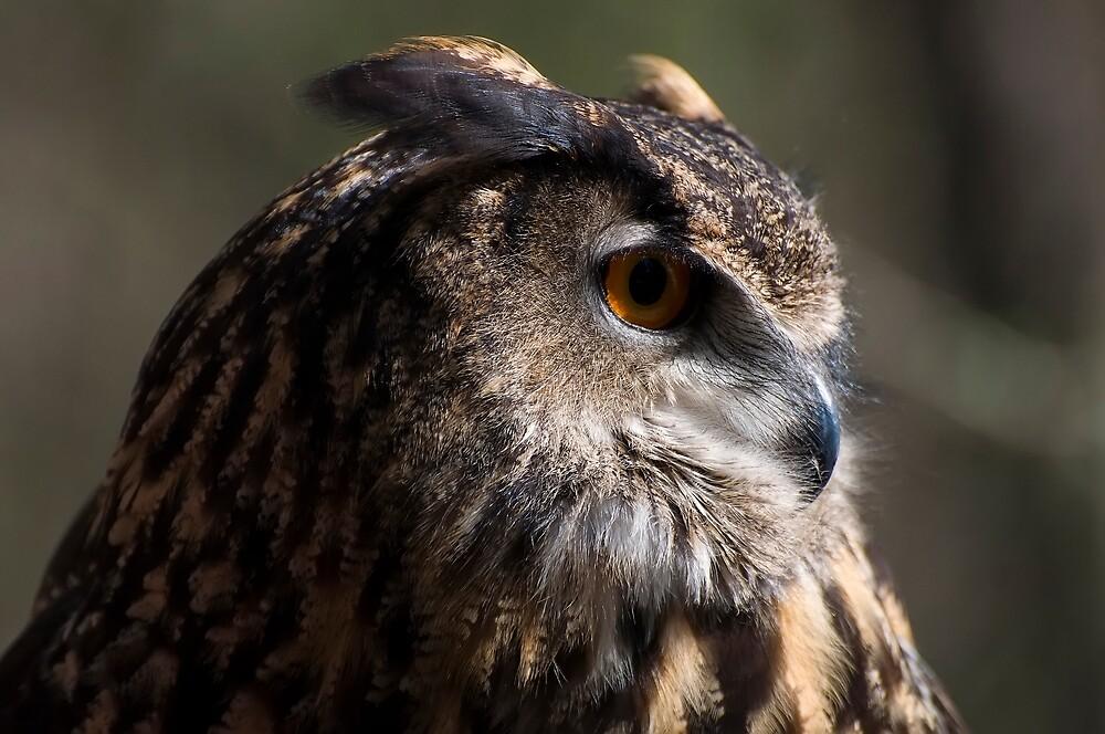 Eagle Owl 3 by chrisflees