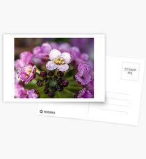 alyssum Postcards