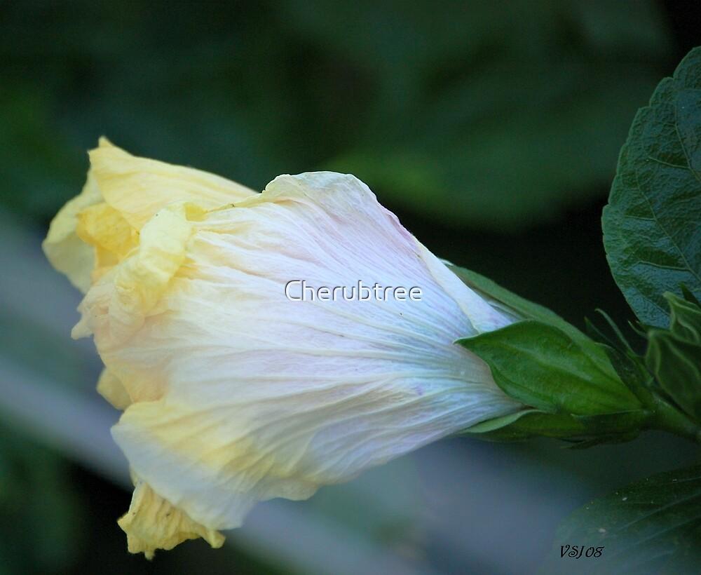 Opening by Cherubtree