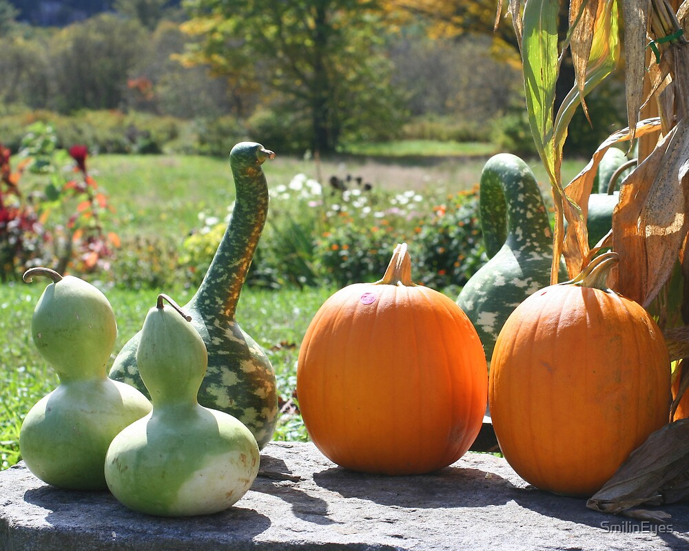 Gourds And Pumpkins by SmilinEyes