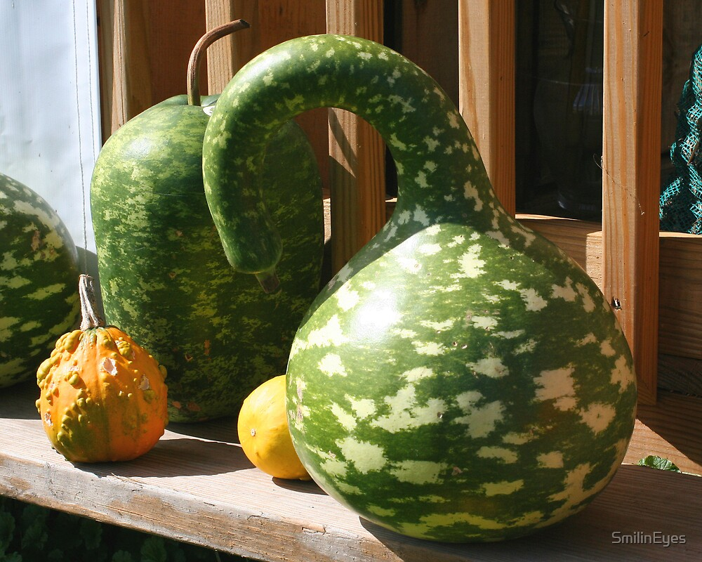 Gorgeous Gourds by SmilinEyes