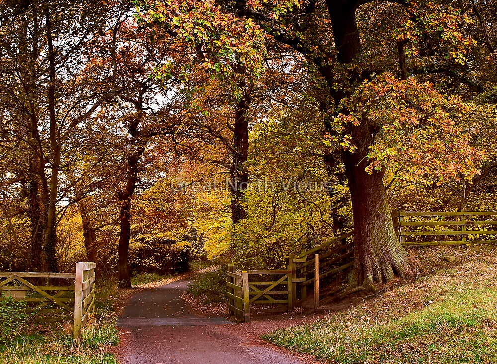 Autumn In Wylam by Great North Views