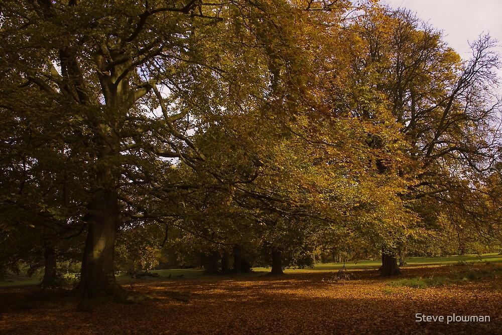 Autumn leaves by Steve plowman