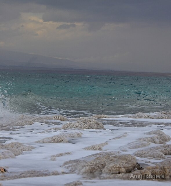 Dead Sea by Amy Rogers
