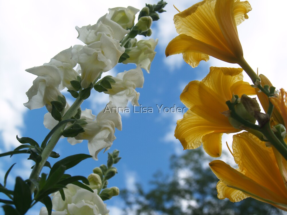 Snapdragons and Stella d'Oro to the Sky by Anna Lisa Yoder