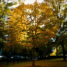 Fall Tree 1 by RDJones