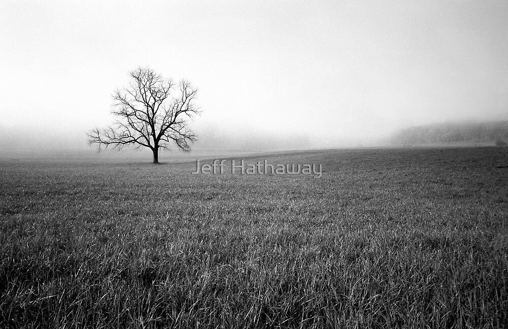 Lone Tree in Black and White by Jeff Hathaway