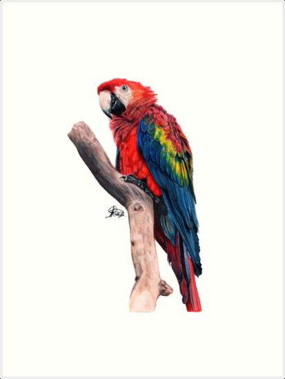 Parrot by Arterized