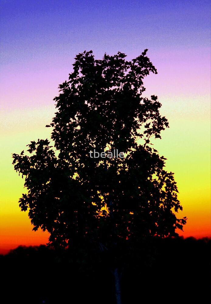 Rainbow Sunset by Terri~Lynn Bealle