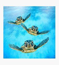 Sea Turtles Swimming Photographic Print