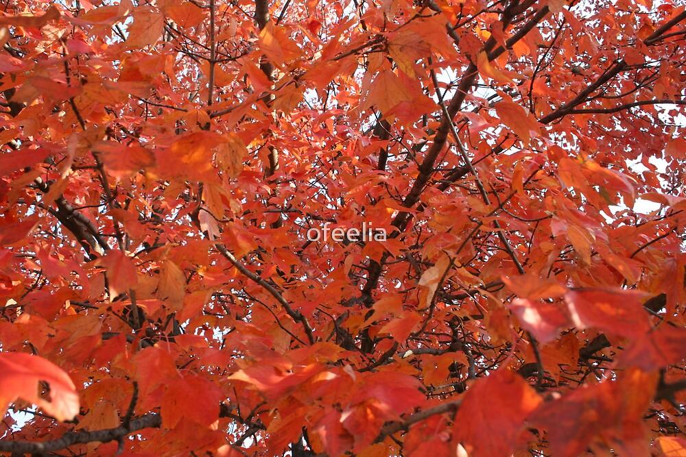 fall in beautiful colors by ofeelia