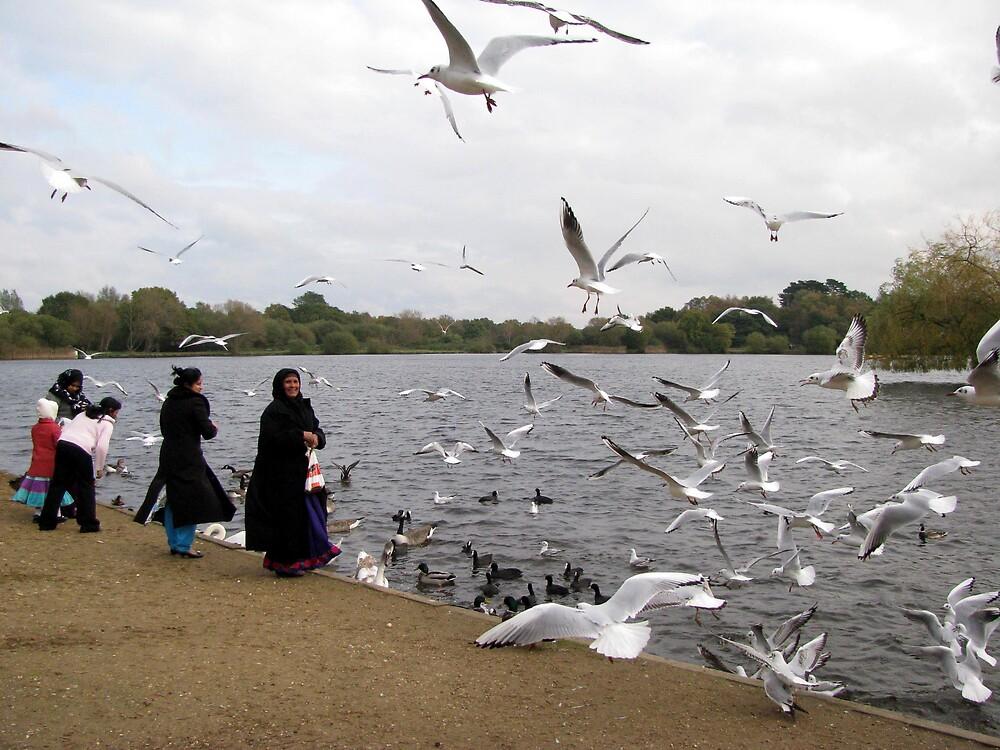 feeding the birds by Caroline Anderson