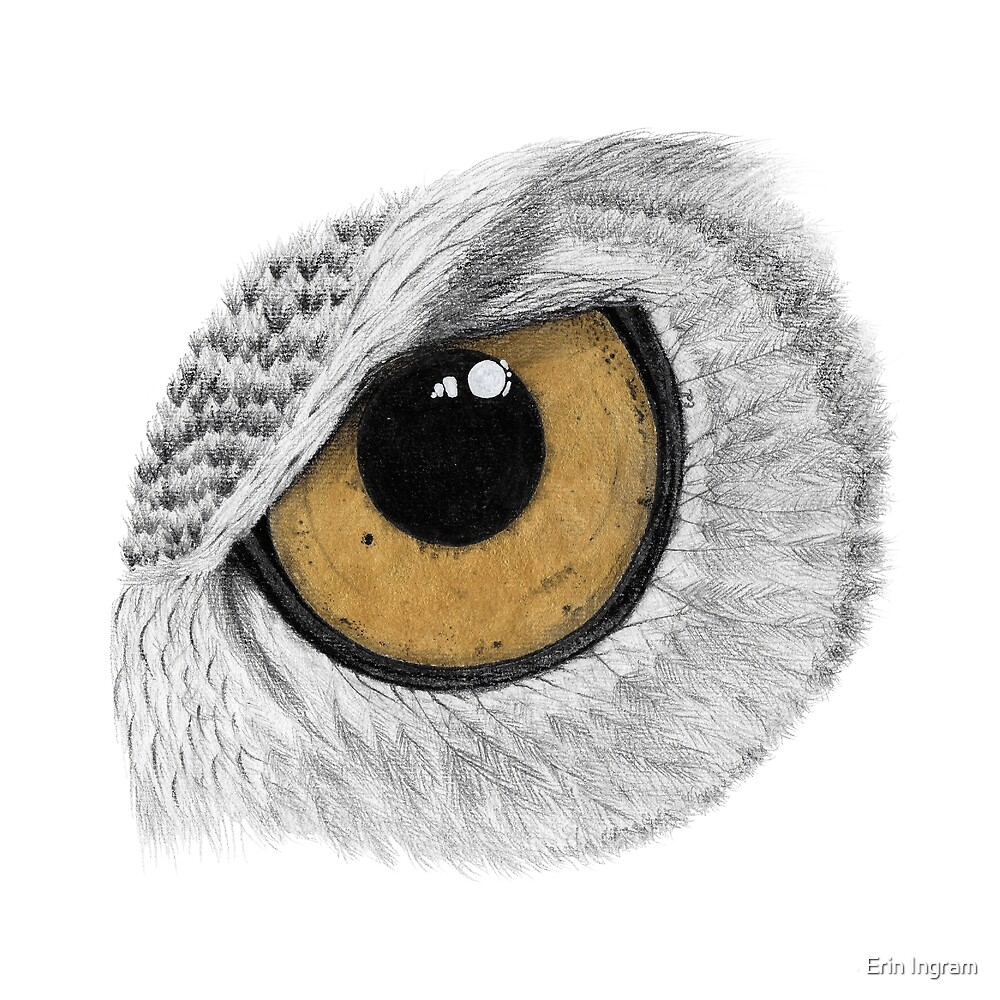 Gold Owl Eye by Erin Ingram