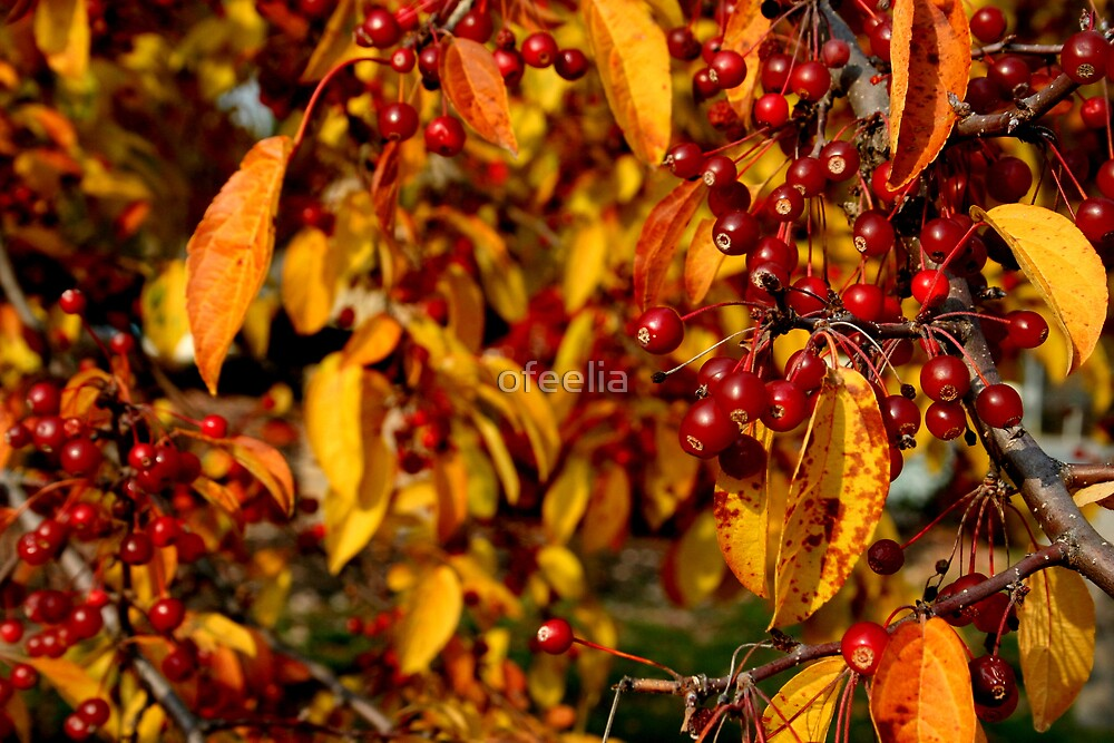 Rich color  by ofeelia