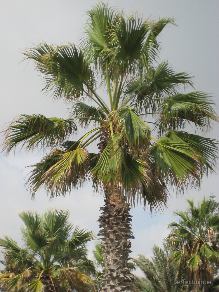 palm tree by perfectwinter