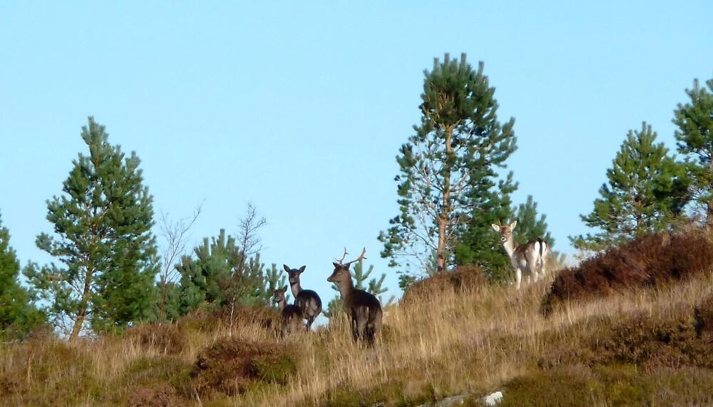 Red Deer by Braedene