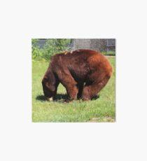 Cinnamon Black Bear Art Board