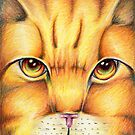 Warrior Cats Lionblaze by moonphiredesign