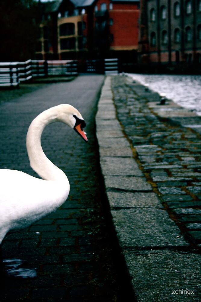 Swan by Crystal Nunn
