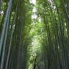 Bamboo Forest by Christina Backus