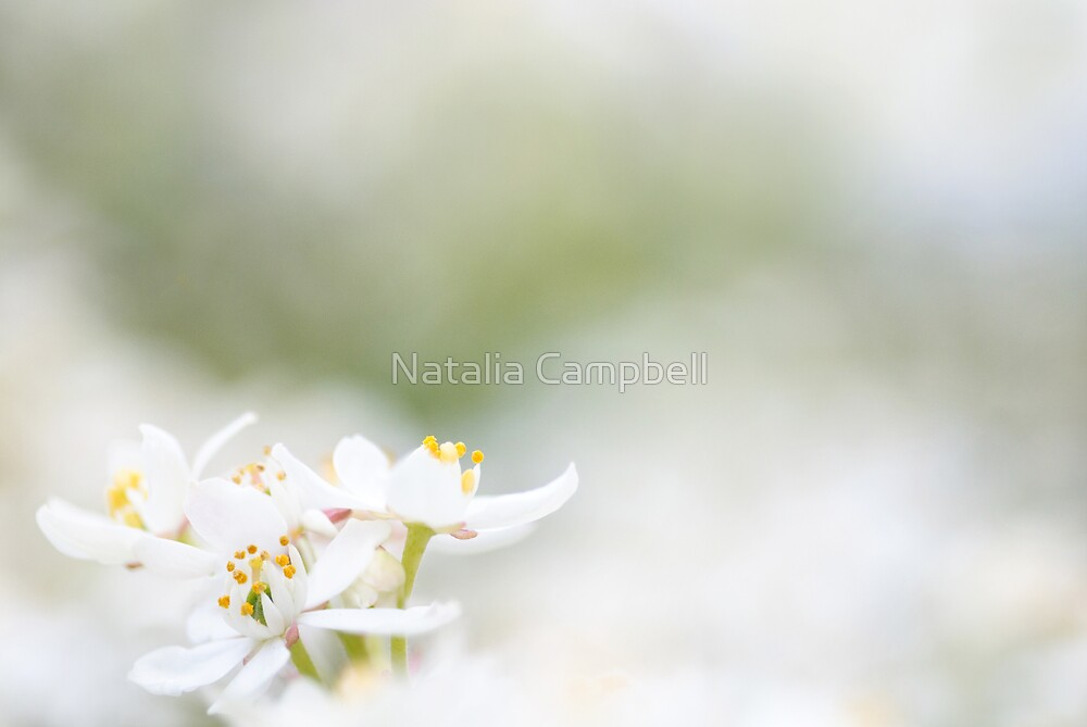 in the clouds of heavenly bokeh... by Natalia Campbell