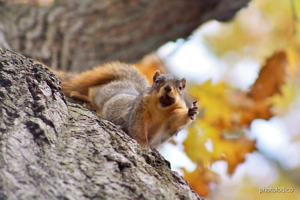 Squirrel Meme by photolodico