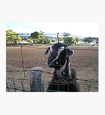 Fenced Out? Not When I'm Hungry! Photographic Print