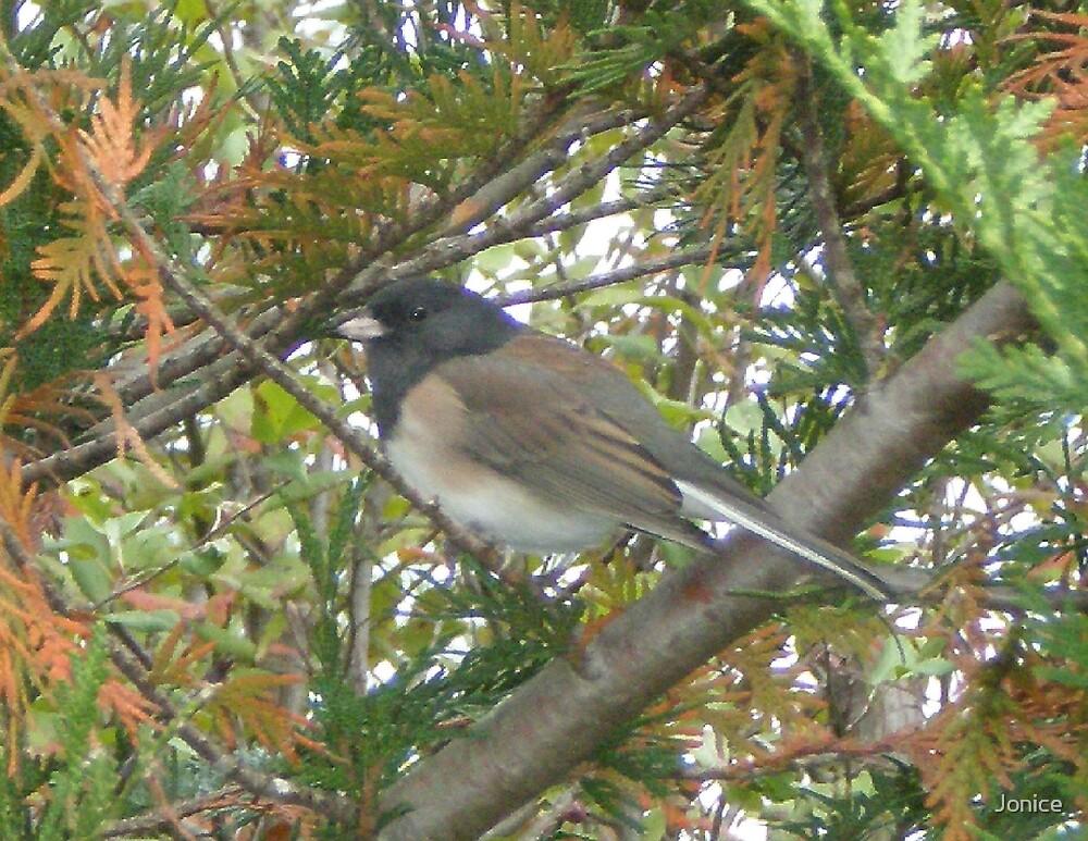 Bird In A Tree by Jonice