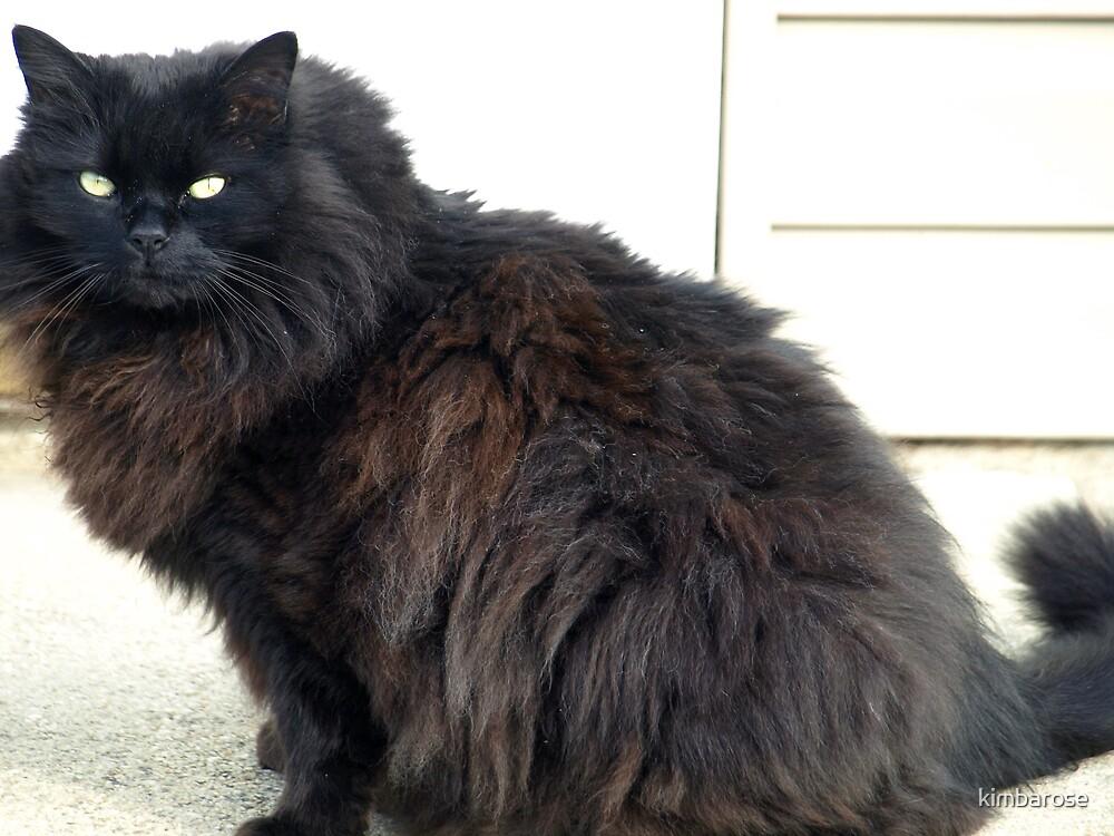 Guard Kitty by kimbarose
