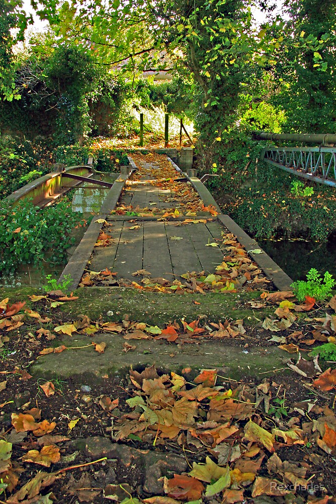 AUTUMN LEAVES OVER BRIDGE by Rexcharles