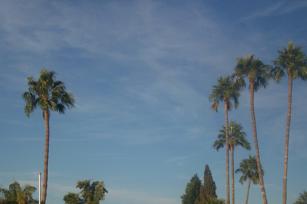 Beautiful Trees by bviva733