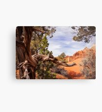 Unique desert beauty at Kodachrome Park in Utah Metal Print
