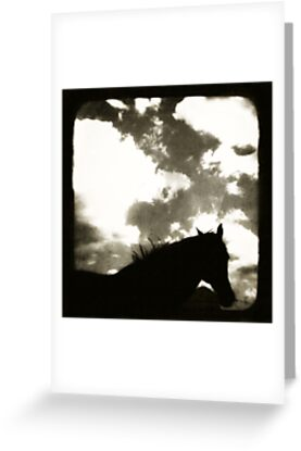 Black Beauty by Jules Campbell