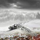 Winter by Igor Zenin