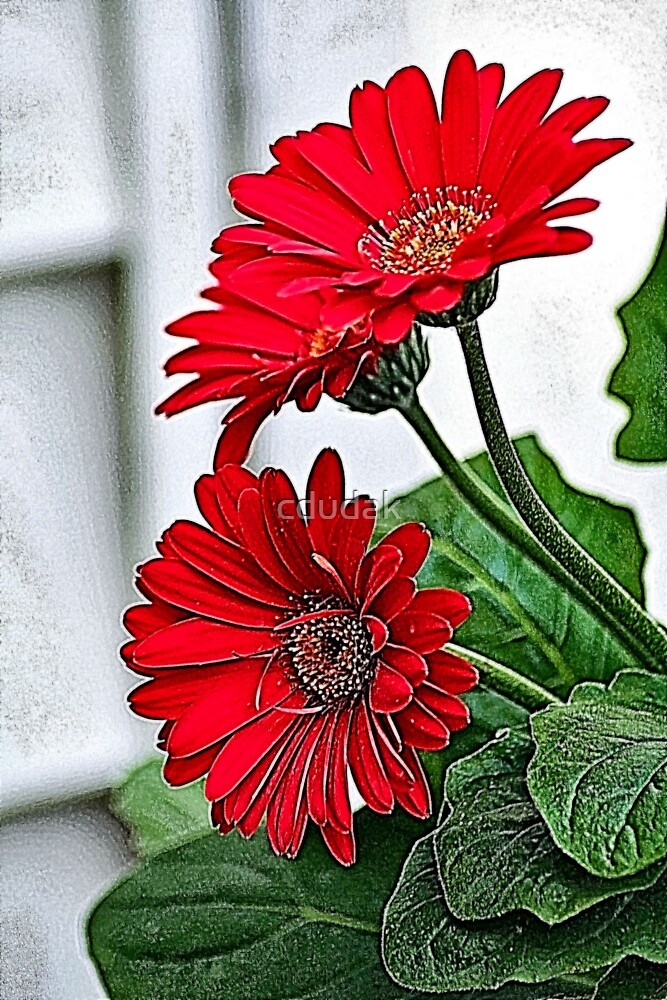 BEAUTY IN RED FRACTALIUS by cdudak