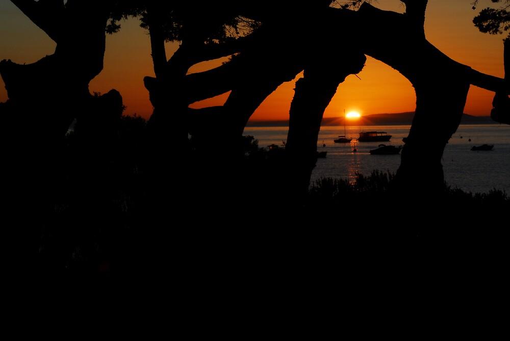 Sunrise through the trees by matt mackay