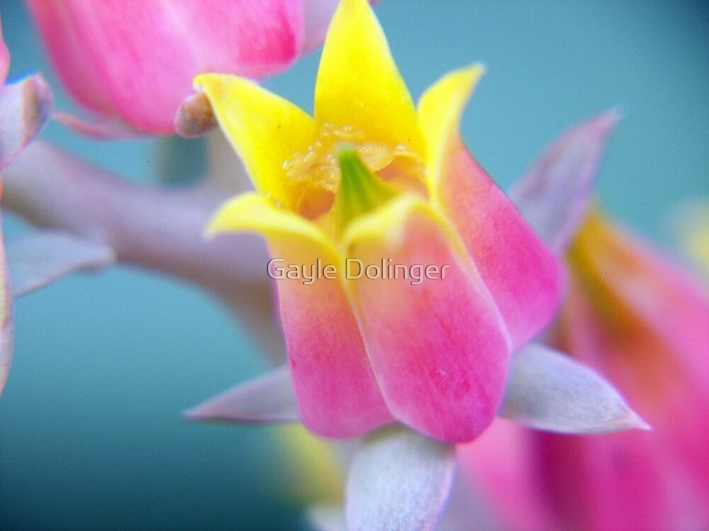 Tiny Bud of Pink and Yellow by Gayle Dolinger