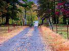 Walking Down Memory Lane by NatureGreeting Cards ©ccwri