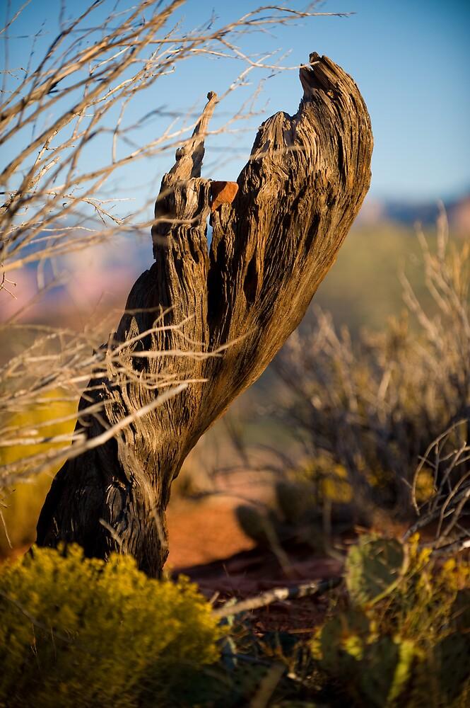 Desert Sunrise by Russ Beinder